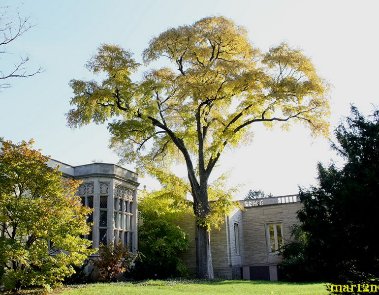 Accolade Elm Tree at Thornhill Education Center