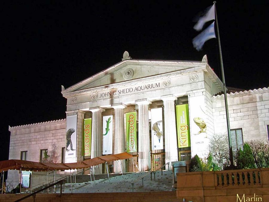 Shedd Aquarium Facade at Night